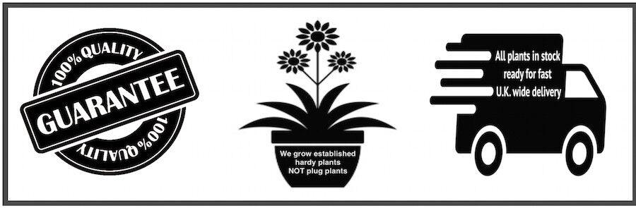 calamazag-plant-nursery
