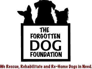 The forgotten dog foundation ebay for charity for Dog daycare santa monica