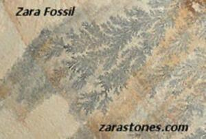 Fossil Square Cut Paving Stone Fossil Sandstone Flagstone Pavers
