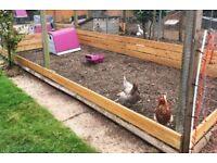 Chicken boarding / kennels
