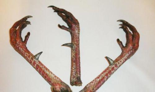 turkey feet taxidermy ebay