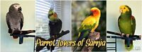 Parrot Lovers of Sarnia Facebook Group