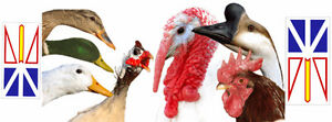 New facebook group for poultry and fowl owners