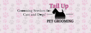 CERTIFIED dog and cat groomer. Lasalle.