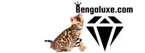 Bengaluxe.com Chatterie de bengal enregistrée TICA