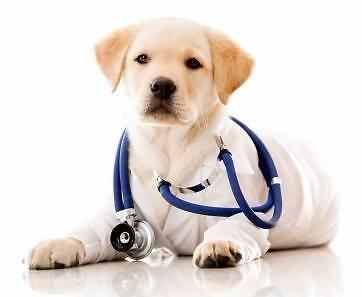 Emergency Veterinary Nurses Wanted! Sydney City Inner Sydney Preview