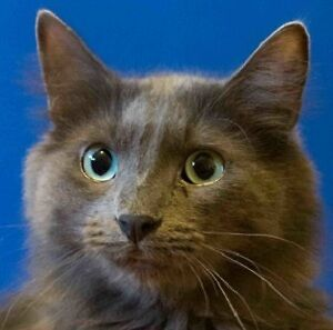 MEOW Foundation's curious Smokie looking for purrfect home!
