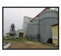 Filly functional Grain Elevator