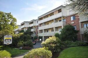 Bright Bachelor Apartment Near Downtown and Oak Bay - Nov 1st