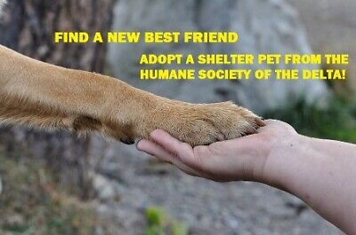 Humane Society of the Delta