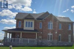 Amazing Brand new home for Rent