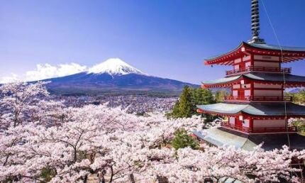 Japanese tutor $20 in Melbourne