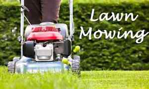 LAWN MOWING Rosebery Palmerston Area Preview