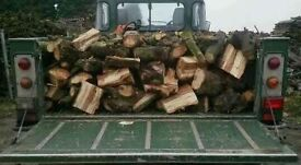 Dry and seasoned logs £100