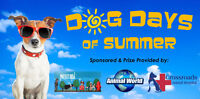 DOG DAYS OF SUMMER CONTEST  chat television