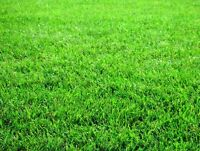 Yard clean-up & small landscaping such as laying sod/grass/rocks