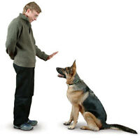 Dog Obedience Instructor