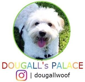 Pet Minding- Dougall's Palace Morley Bayswater Area Preview