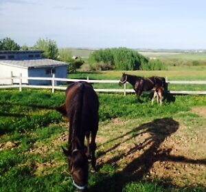 Horse Boarding NW of Airdrie