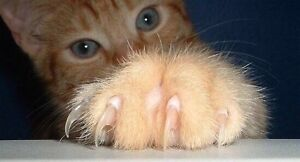 Our Furry Friends Cat Nail Clipping Done in your Home: $12.00 London Ontario image 1