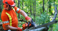 ONE DAY CHAINSAW SAFETY COURSE, Saturday June 13th