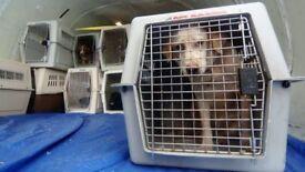 Pet flight transporter for pet up to 10kg