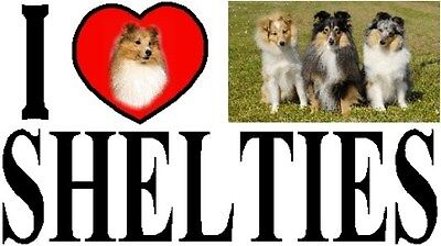 I LOVE SHELTIES Car Sticker By Starprint - Featuring the Shetland Sheepdog