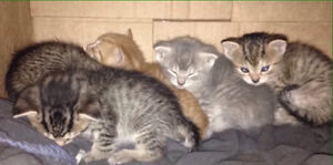Five kittens need loving homes