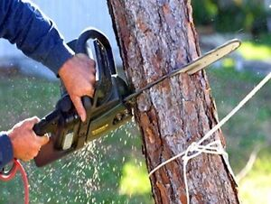 Tree lopping, pruning and removal Bondi Eastern Suburbs Preview