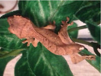 Created gecko hatchling