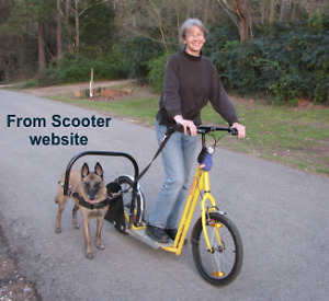 ADULT SCOOTER WITH HARNESS FOR DOG