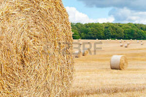 Wanted Round Bales of Hay