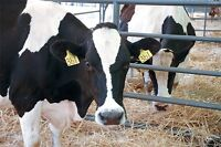 Dairy Opportunity Near Fort Macleod