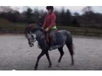 13hh mare