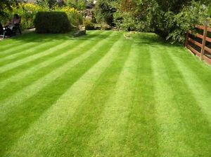 PROFESSIONAL LAWN AERATION – APPOINTMENTS AVAILABLE NEXT WEEK! Kitchener / Waterloo Kitchener Area image 1