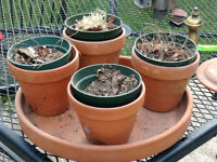 Clay pots with tray for sale