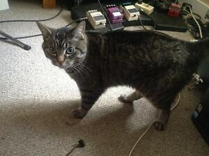 Free 12 yr old female cat needing a new home by Aug 15