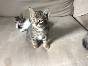 Adorable kittens ti give away.