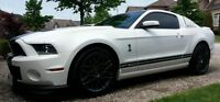 2013 Ford Mustang Shelby GT500 Must See 3150 Km