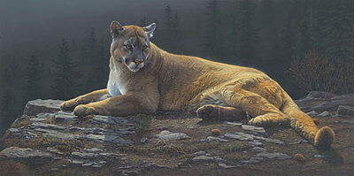Daniel Smith RADIANT REPOSE giclee canvas Cougar #99/100