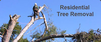 Affordable Tree Removal 7096908417
