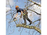 Tree pruning, tree surgery, tree maintenance, tree care, tree surgeon.