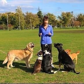 Professional dog walker and pet sitting