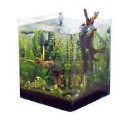 Aquarium Wasserpflanzen