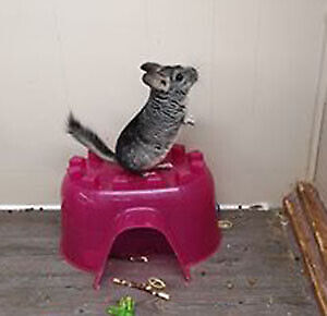 refuge pour animaux exotiques, reptile, rongeur, lapin, herisson