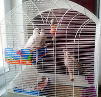 two cute and lovely doves or with a cage