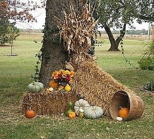 Wanted Hay/Straw Bales for Halloween decorating