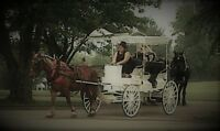 Horse Driven Rides for your Wedding