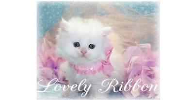 lovelyribbon1