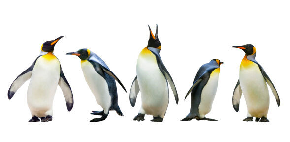 World Penguin day falls on April 25